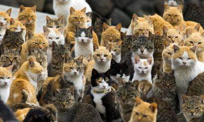 insula pisicilor1