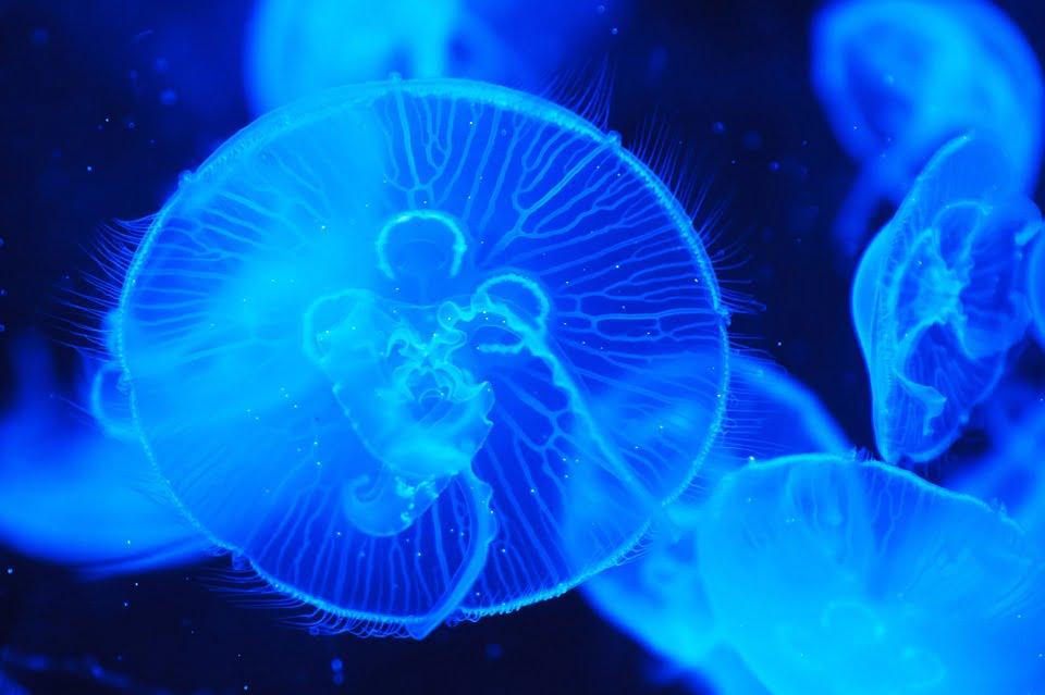 meduze