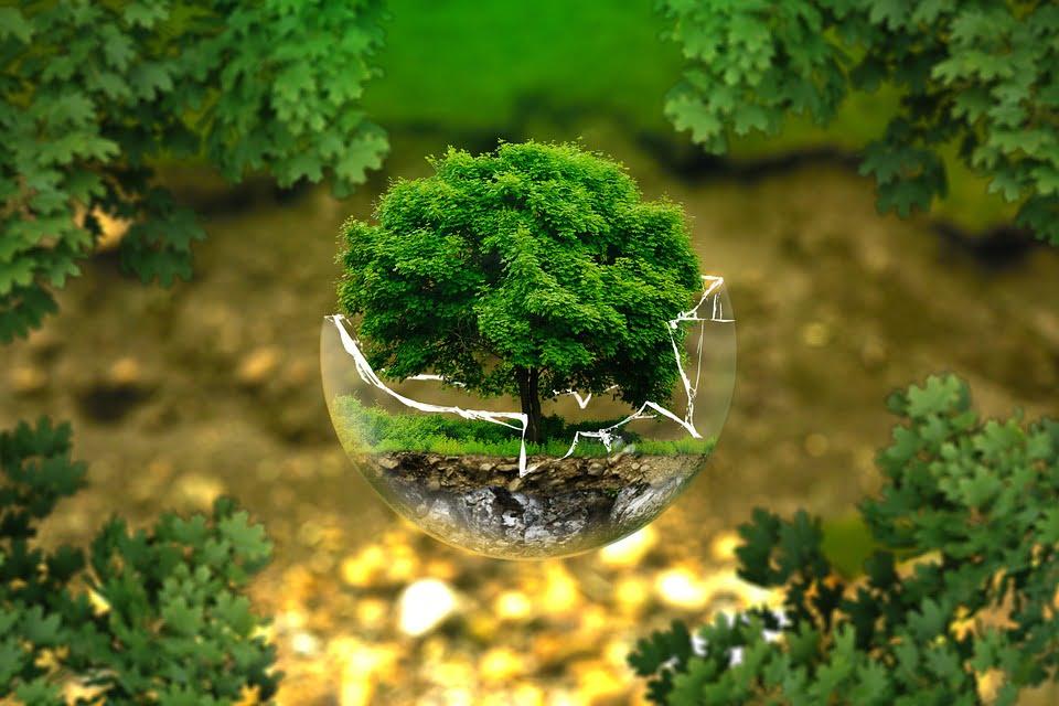 copaci planeta