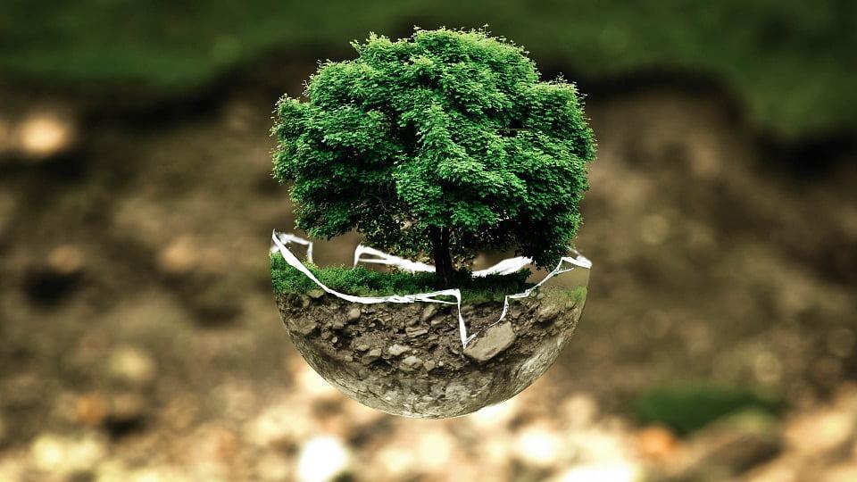 copaci planeta1