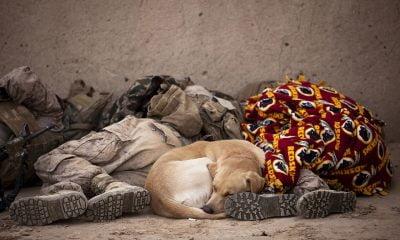 somn soldati