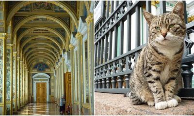 pisici muzeu