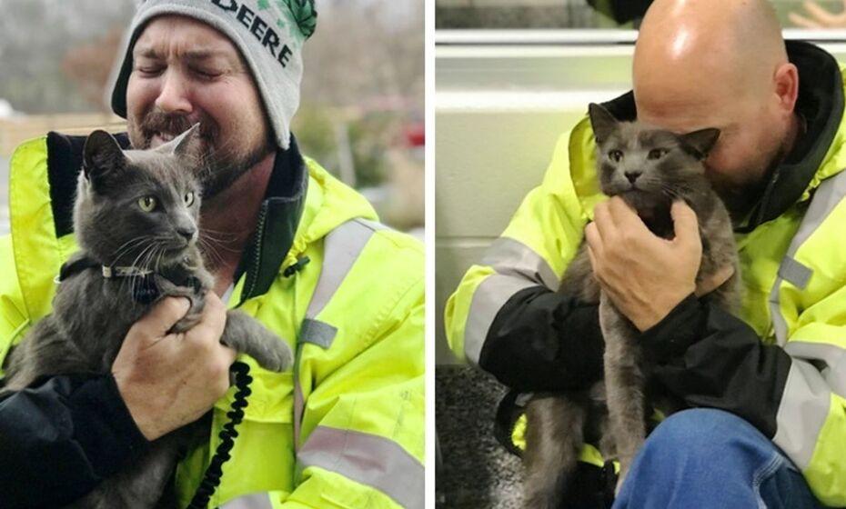 soferul si pisica
