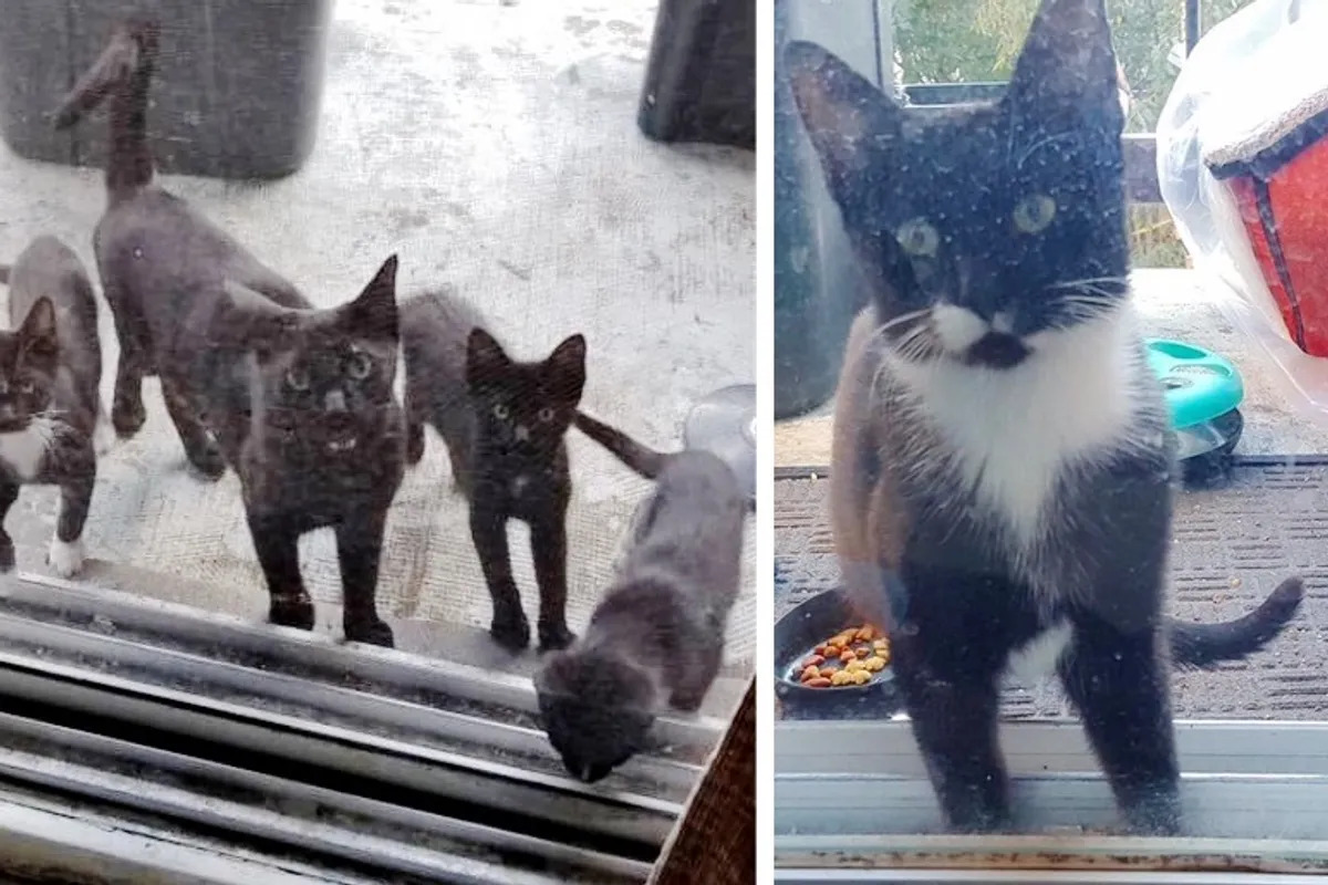 familie pisici