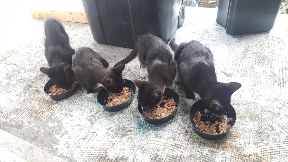 familie pisici2