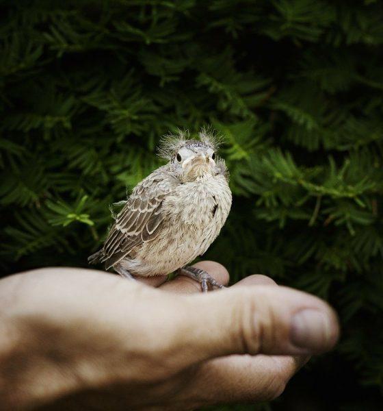 bird-pasare